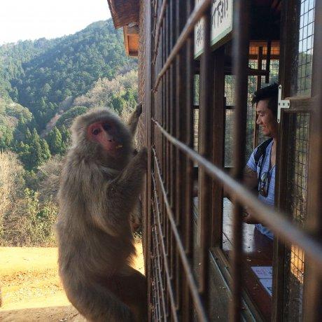 京都岩田山猴子公园