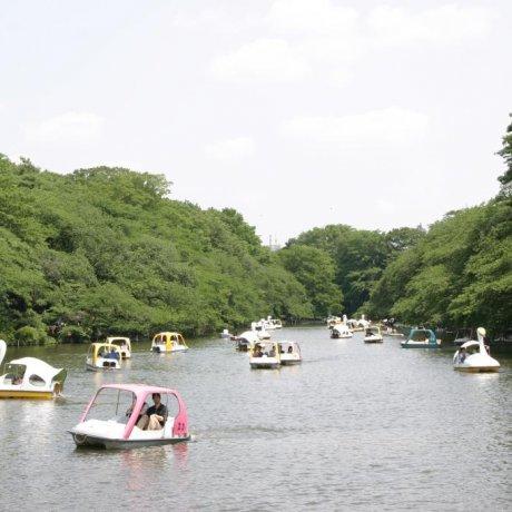 A Stroll Through Kichijoji
