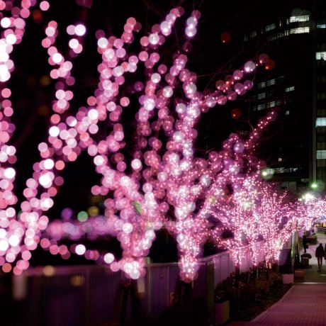 Celebrate the New Year in Shinagawa