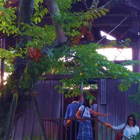 飞鸟寺的梵钟