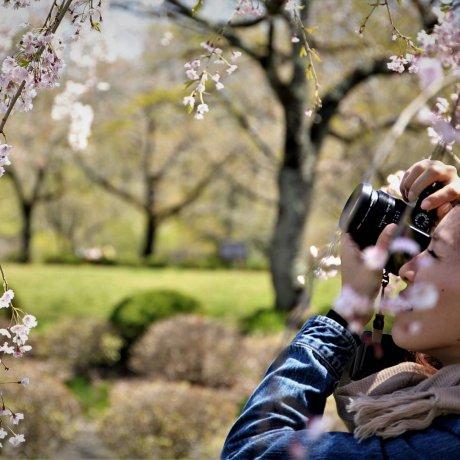 日本花园摄影班