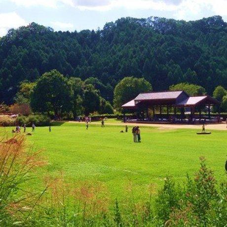 国营飞鸟历史公园